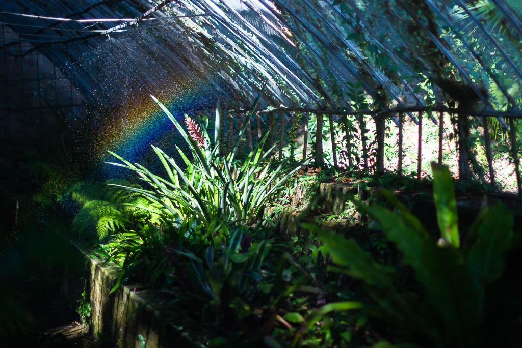 Greenhouse Botanical Garden Málaga