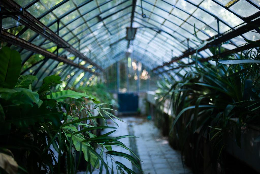 Greenhouse Botanical Garden Malaga