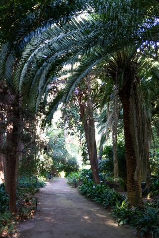 Palmtrees Botanical Garden Málaga