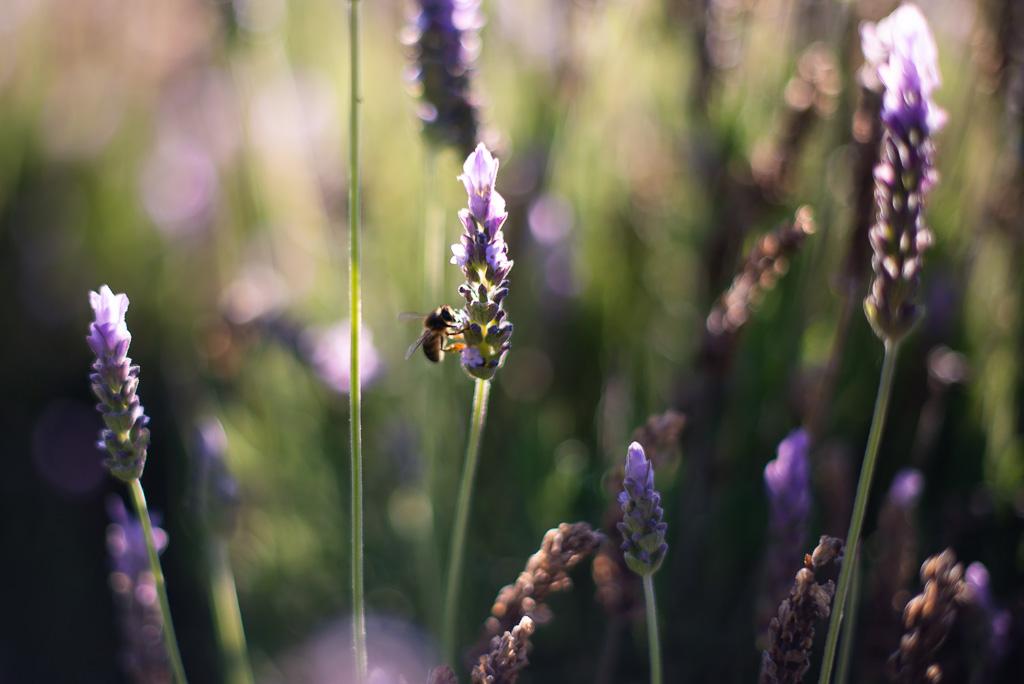 Bee Botanical Garden Malaga