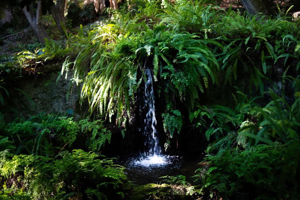 Waterfall Botanical Garden Malaga