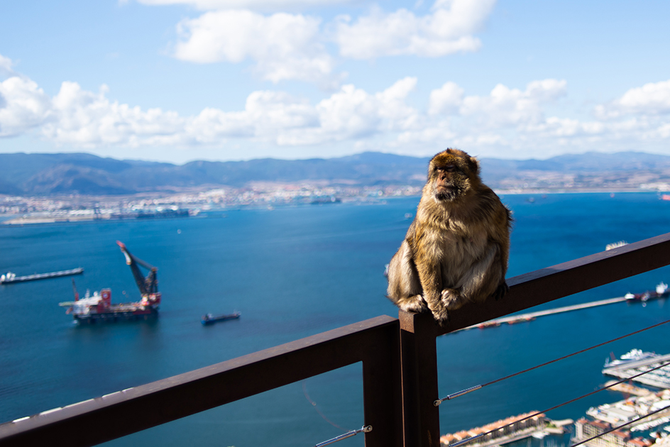 Day trips from malaga to Gibraltar