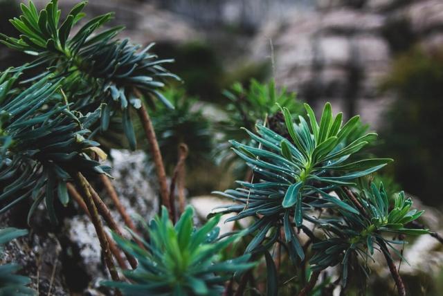 El torcal plants