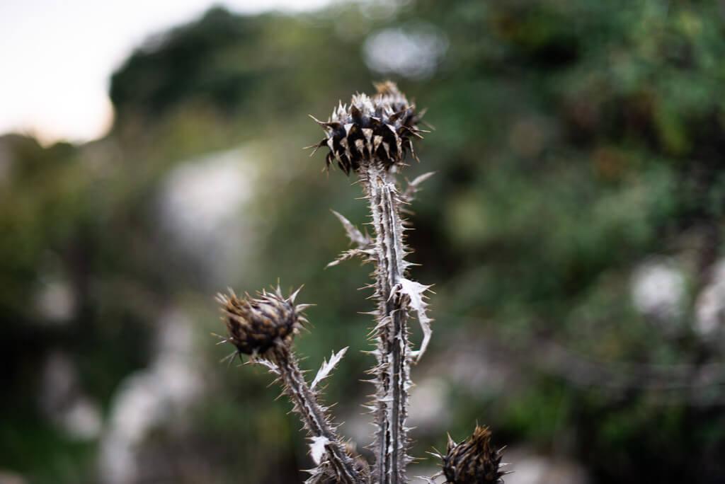 Flora at El Torcal