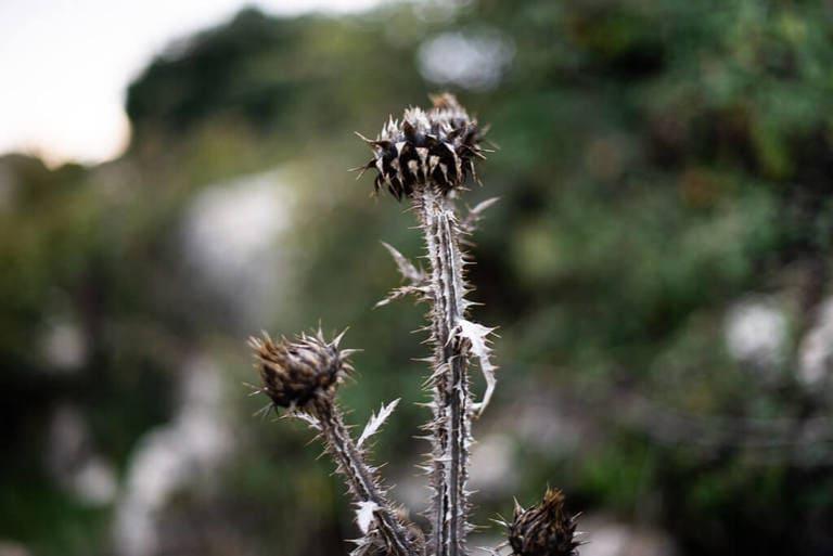 nature torcal