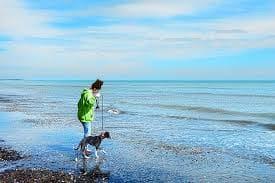 playa con perros